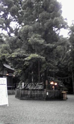 Miwa4