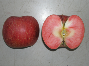Fruitrubisuito_kajitu